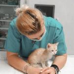 clinica veterinara non stop crystal vet