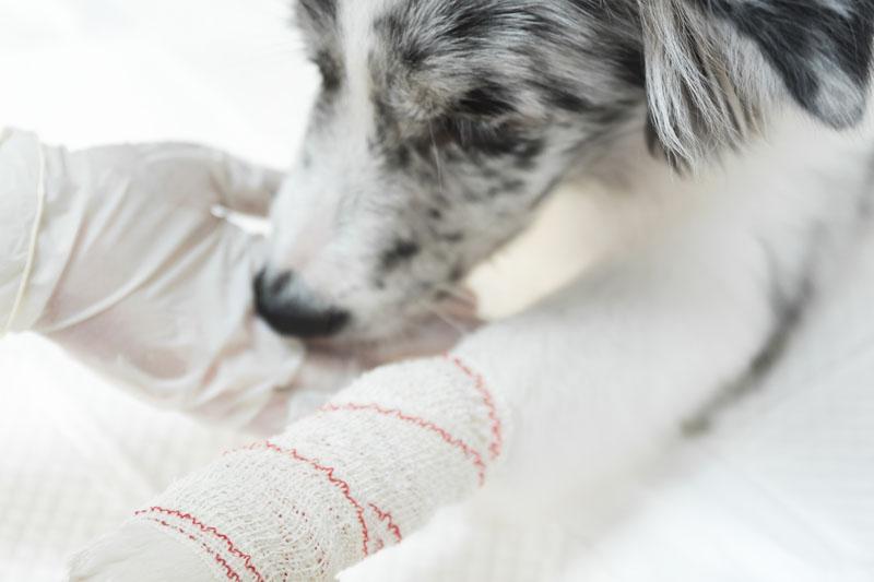 ortopedie veterinara